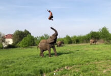 Rene Kaselowsky Elephant Stunt Video Goes Viral