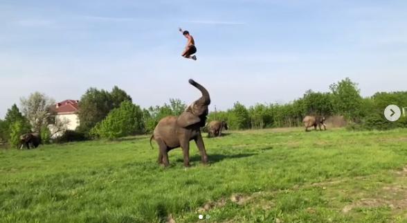 Rene Kaselowsky Elephant Stunt Video Goes Viral