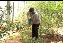 MegaStar Chiranjeevi Accepted Green Challenge