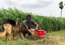SS Rajamouli Accepted Haritha Haram Challenge